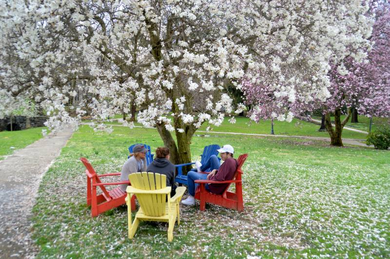 Three students sit facing away from the camera outside on a college campus under a Cherry Tree.